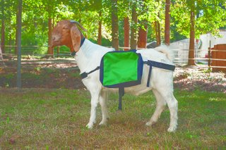 Soft Sided Goat Pack