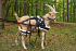 Deluxe Driving Harness