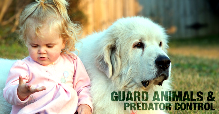 Early Training of Livestock Guardian Dogs